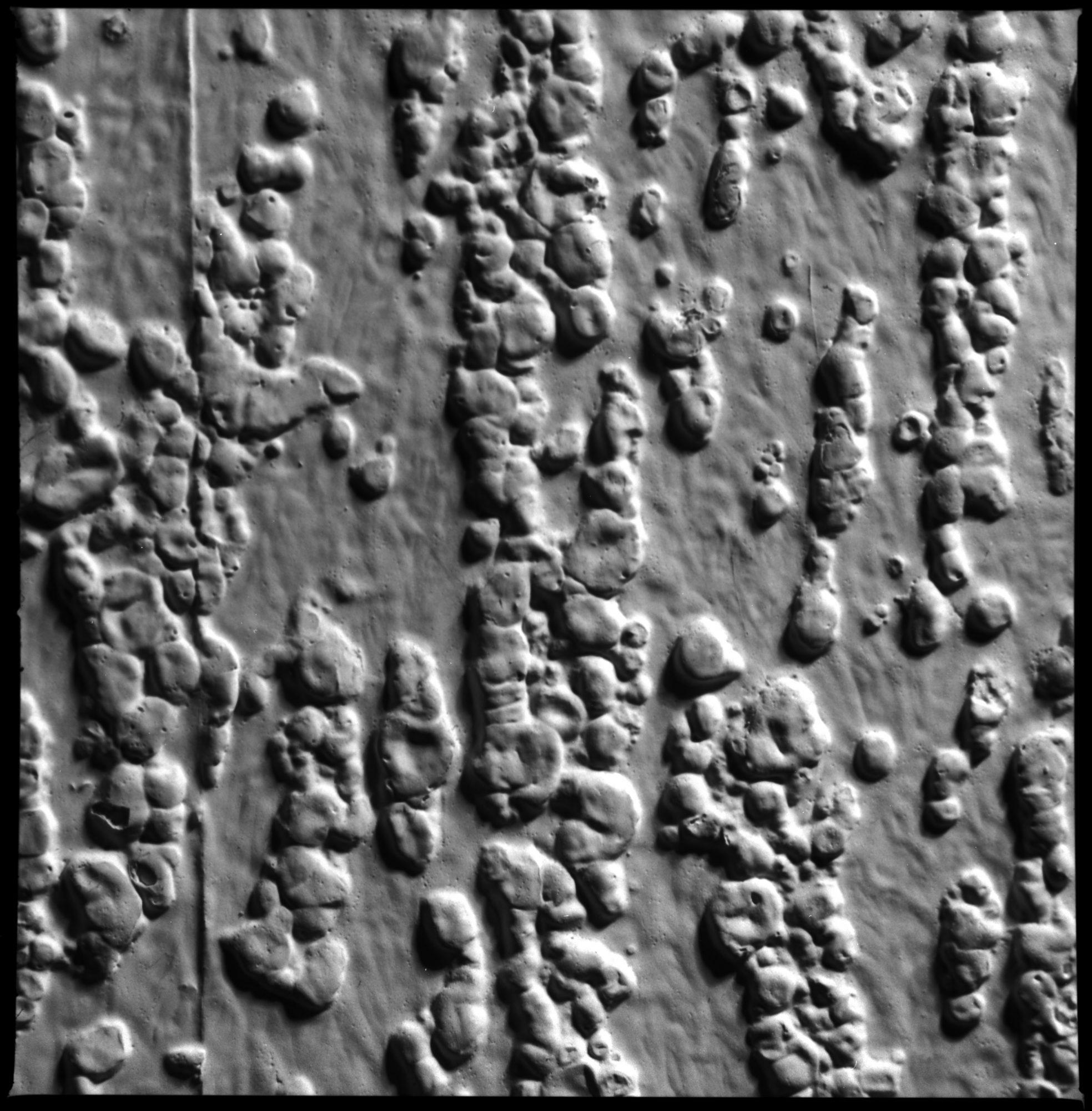 Raufasertapete / Ingrain Wallpaper